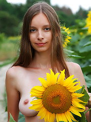 Delicious teen with impressive breasts and hairy pussy taking off clothes among the sunflowers. - Erotic and nude girls pics at SoloTeenPics.com